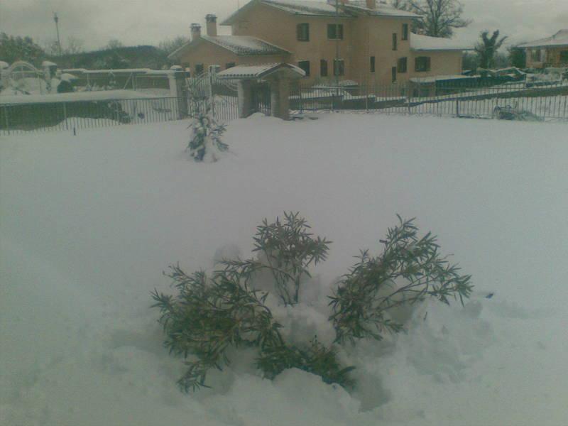 Neve a San Lorenzo Nuovo